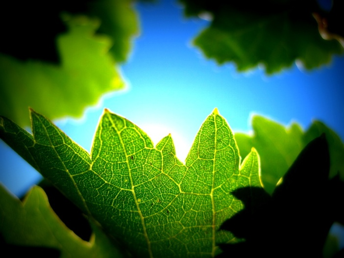 Sund behind leaves by Monikabuz
