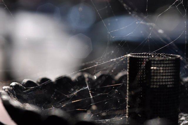 spiderweb_by_suinaliath-d3pvdw1