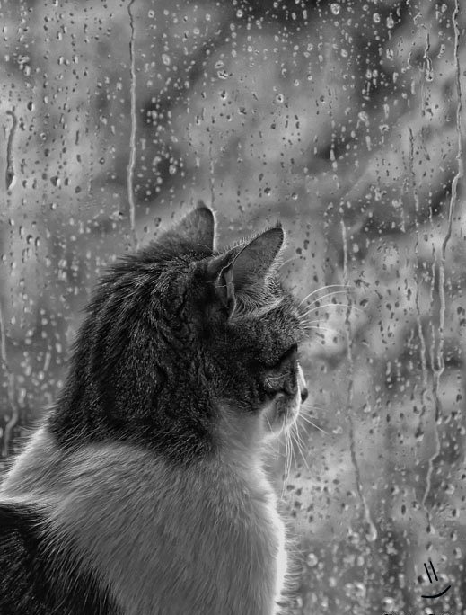 watching_the_rain____by_lovesumer-d37rlpk