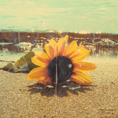 sunflower__vintage_by_mambalicious1